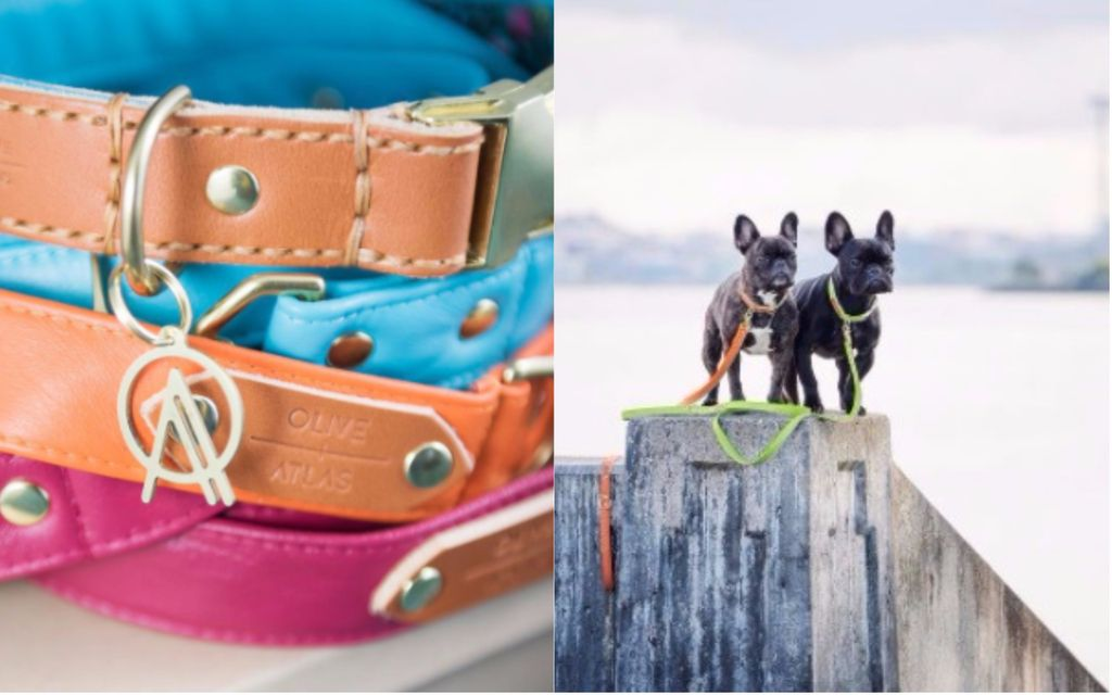 long retractable dog leash for pet friendly getaways