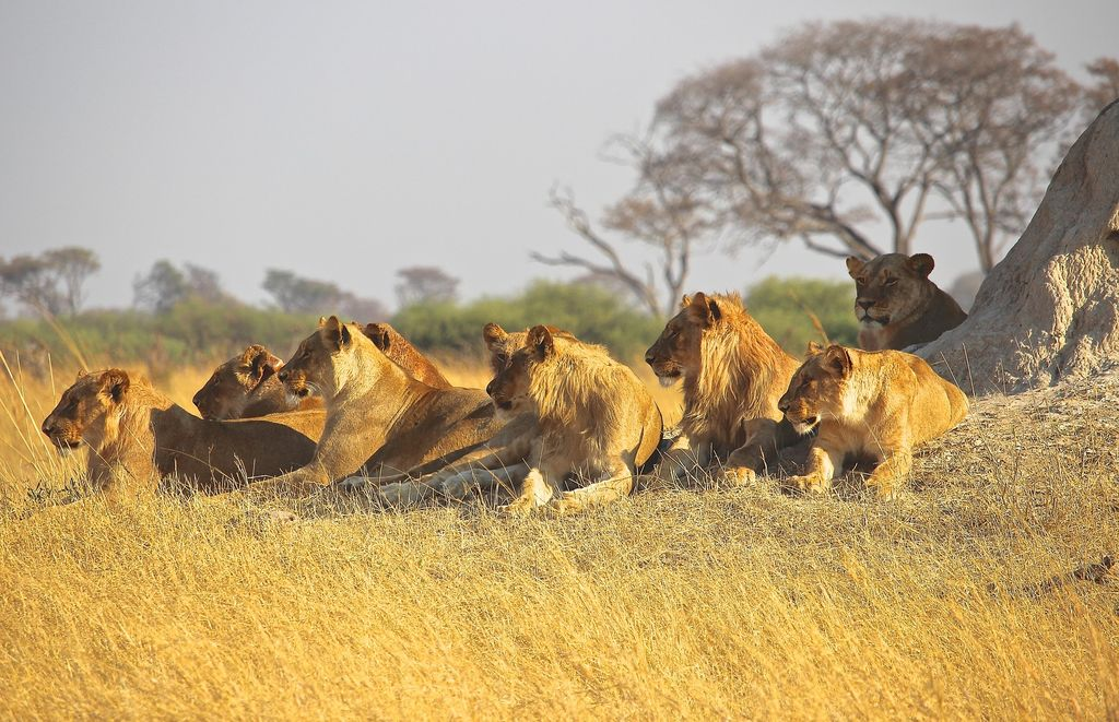 Travel Guide: Pro Tips for South African Safari Travel