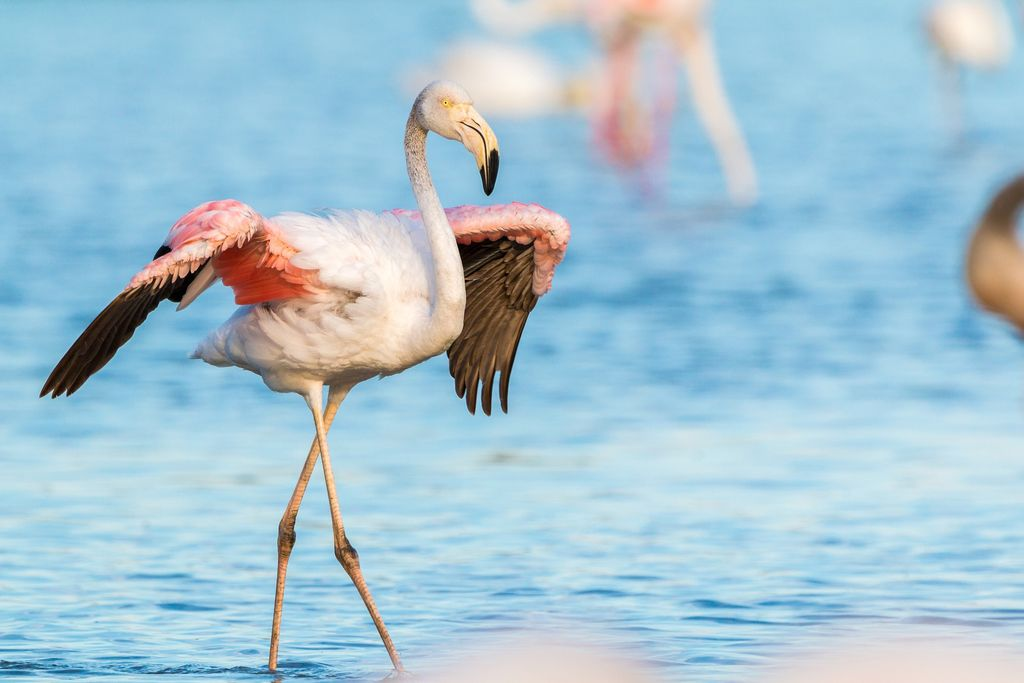 Flamingo at one of best places to visit in South Africa: iSimangaliso Wetland Park