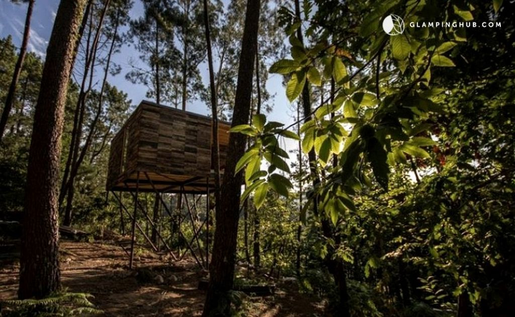 View of the surrounding forest at treehouse hotel Spain in Galicia