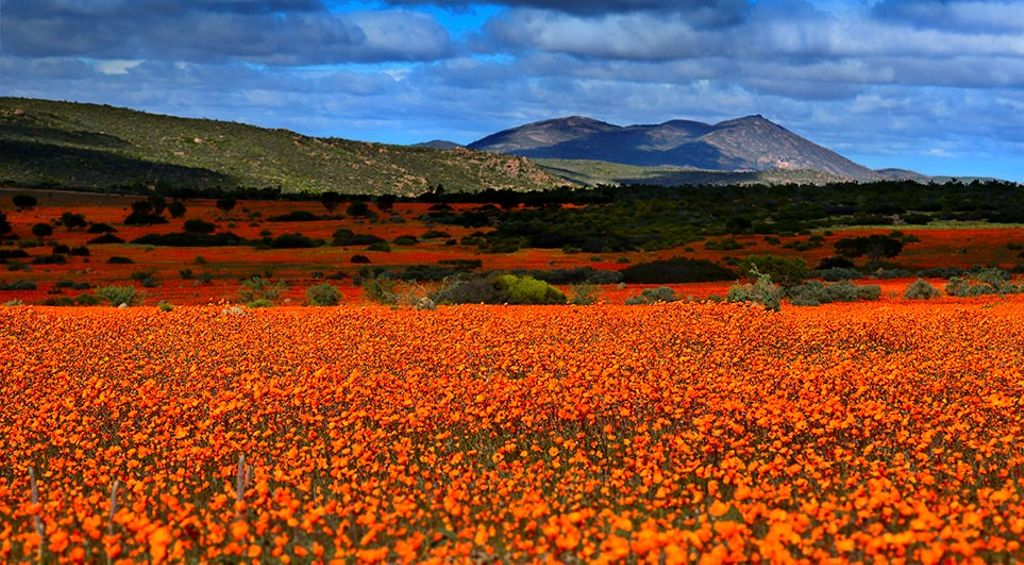 Namaqualand is one of the top destinations for where to go in South Africa