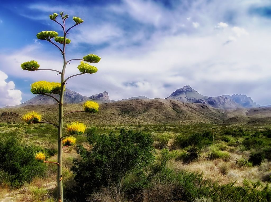 Texas camping landscape in Big Bend National Park, Texas