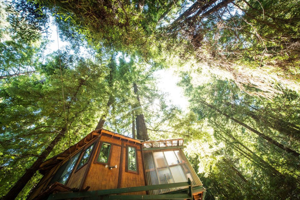 monterrey bay treehouse and one of the best gifts for the man who has everything and wants nothing
