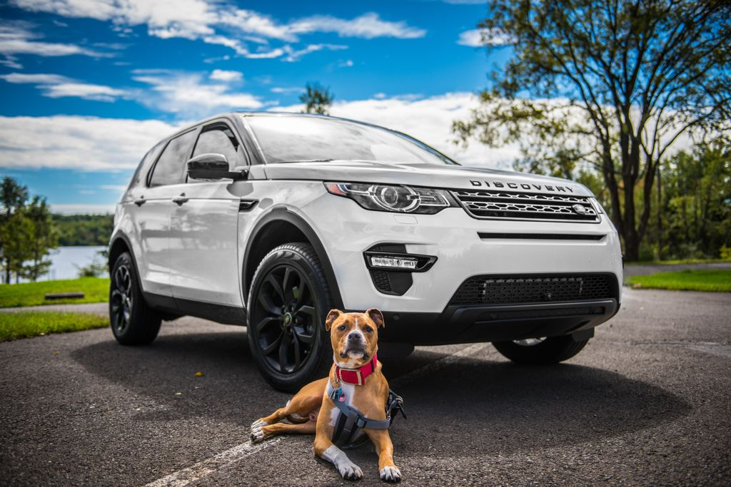 dog posing in front of four wheel drive car, the perfect transport and one of the best tips for traveling with dogs