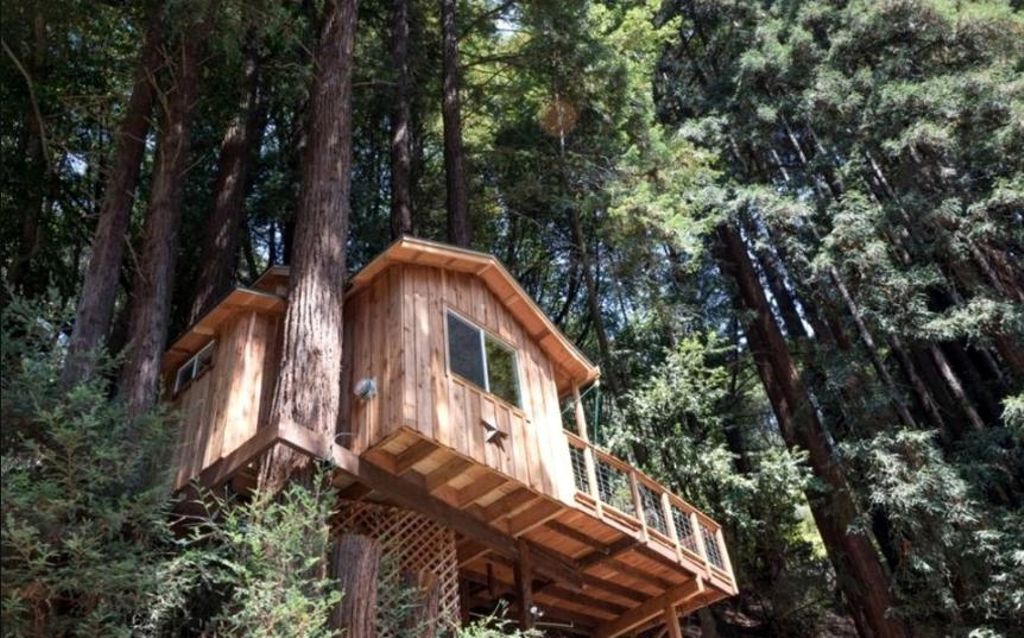 Tree house in the Redwoods of Santa Cruz, California