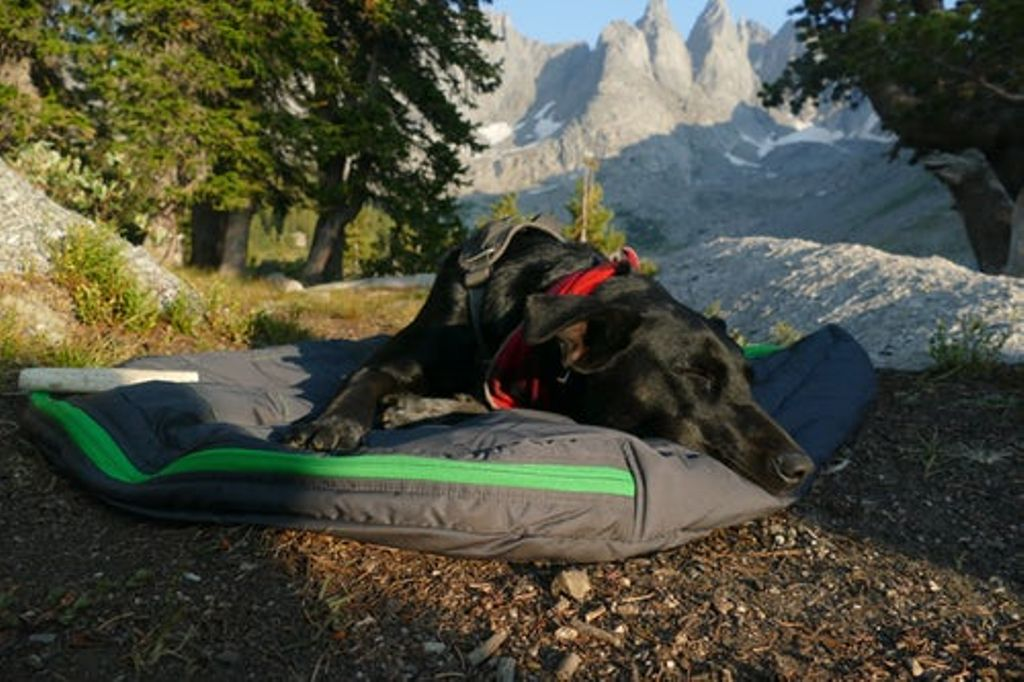 fido enjoying a dog sleeping bag