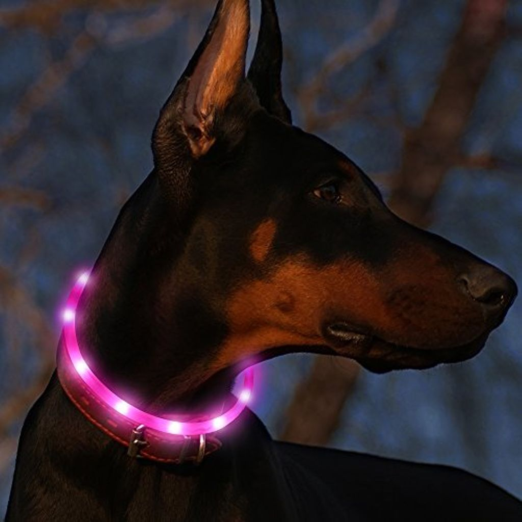 dog wearing LED collar for night hikes during state park camping trips and more