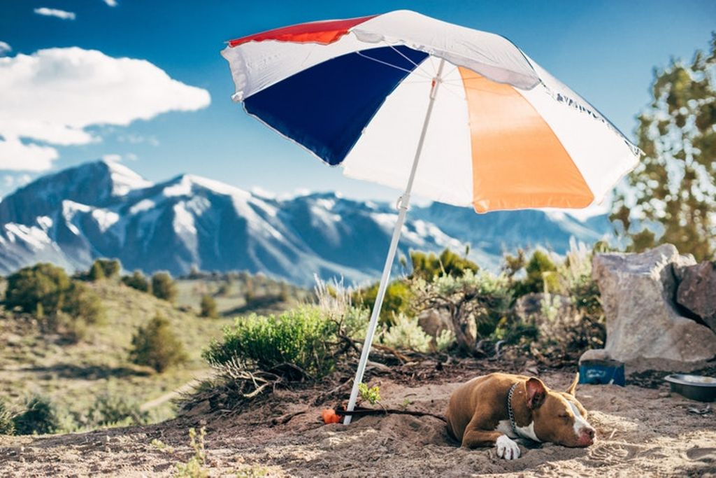 dog behaving with leash on during getaways near the rockies