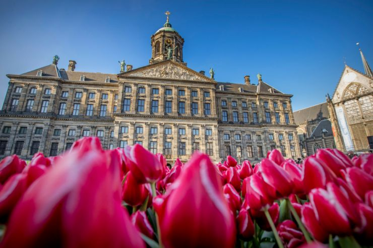 image of one of the best events in the netherlands: tulip festival in Amsterdam