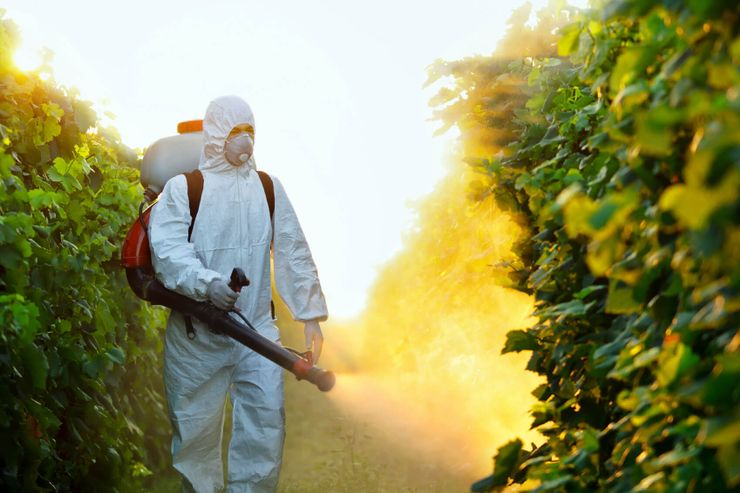 man spraying leaves in effort to keep people continue avoiding chemical pesticides