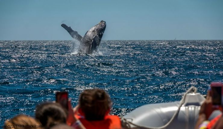 children enjoy some of the best whale watching in maine